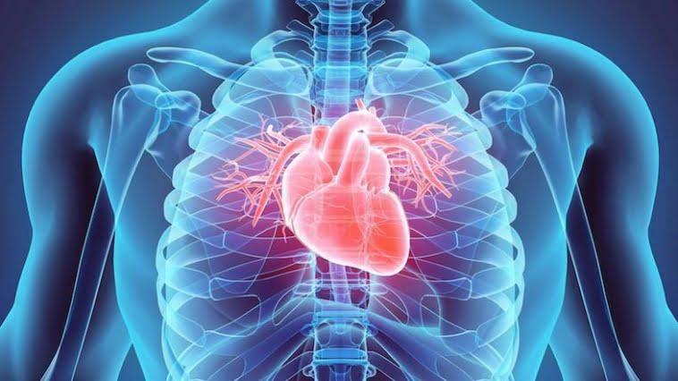 cardiovascular checkup